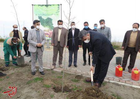 غرس تعدادی نهال با حضور سرپرست سازمان منطقه آزاد انزلی