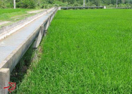 مدیر عامل شرکت آب منطقه ای گیلان : اجرای طرح نوبت بندی آب کشاورزی در گیلان ضروری است